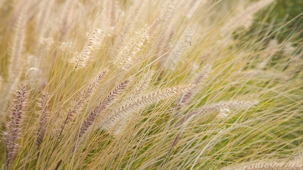 Pics and other stuff: african grasses