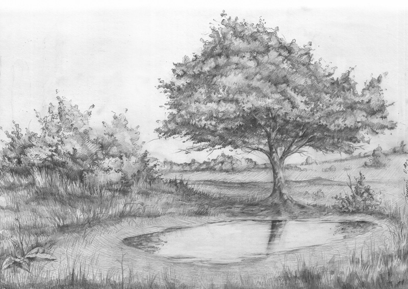 природа лето карандашом рисунок