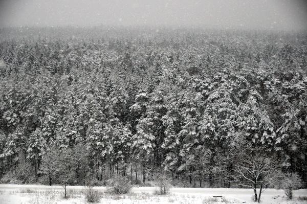 Вид из окна зима полина трояновская