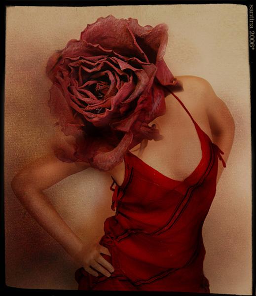 терять голову от аромата. корица и роза.  519x600  142 Kb ---------  (кликните по изображению, чтобы вернуться)