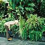садовый гном